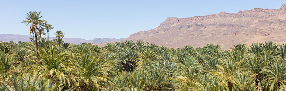 Palm groves in the Draa Valley